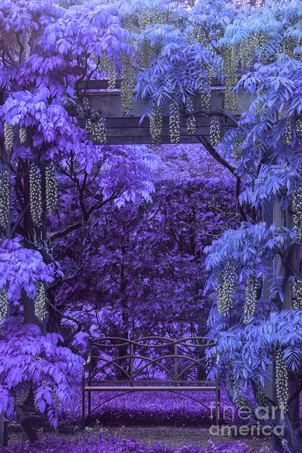 Purple Passion Photograph by Marilyn Cornwell