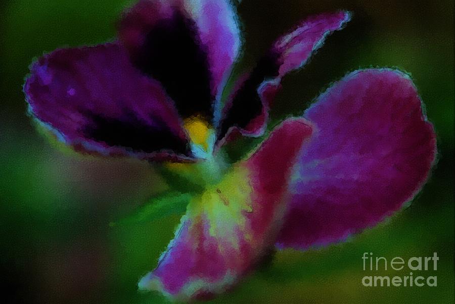 Purple Passion Pansy by Terri Creasy