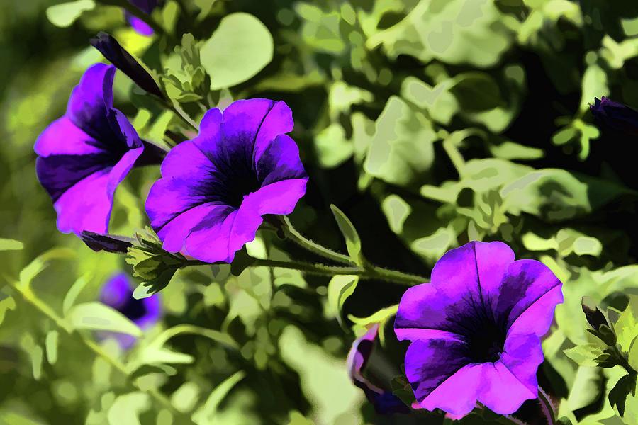 Petunias Digital Art - Purple Petunias by Christine Segalas