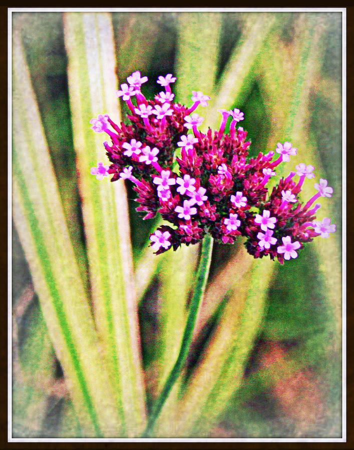 Flowers Photograph - Purple Pleasure by Elizabeth Babler