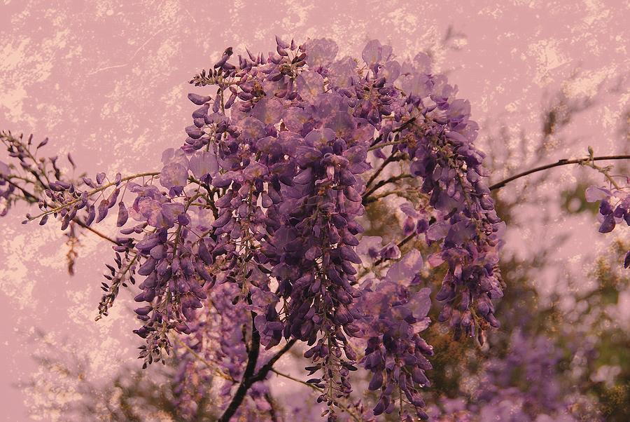Wisteria Flowers Photograph - Purple Pleasures by Angie Tirado