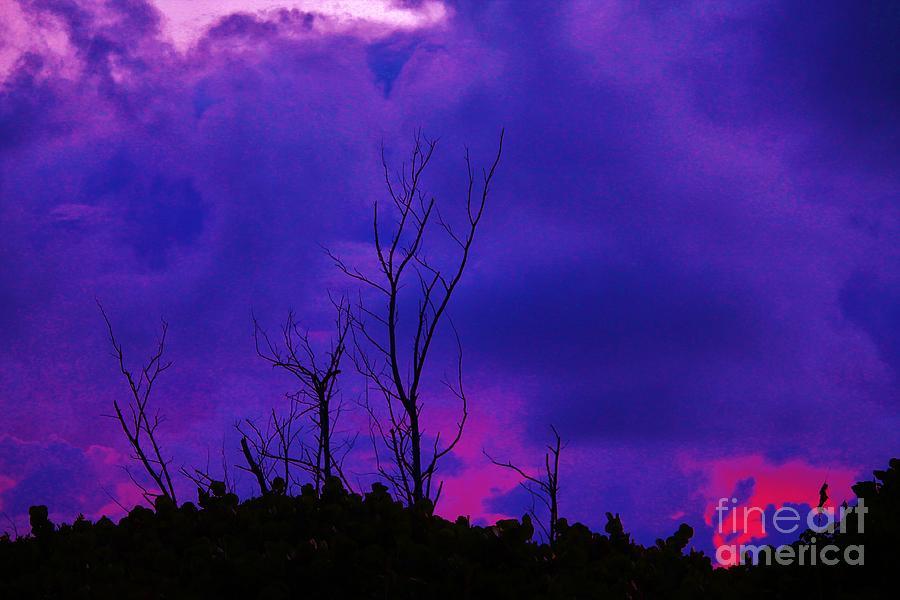 Rain Photograph - Purple Rain by Keri West