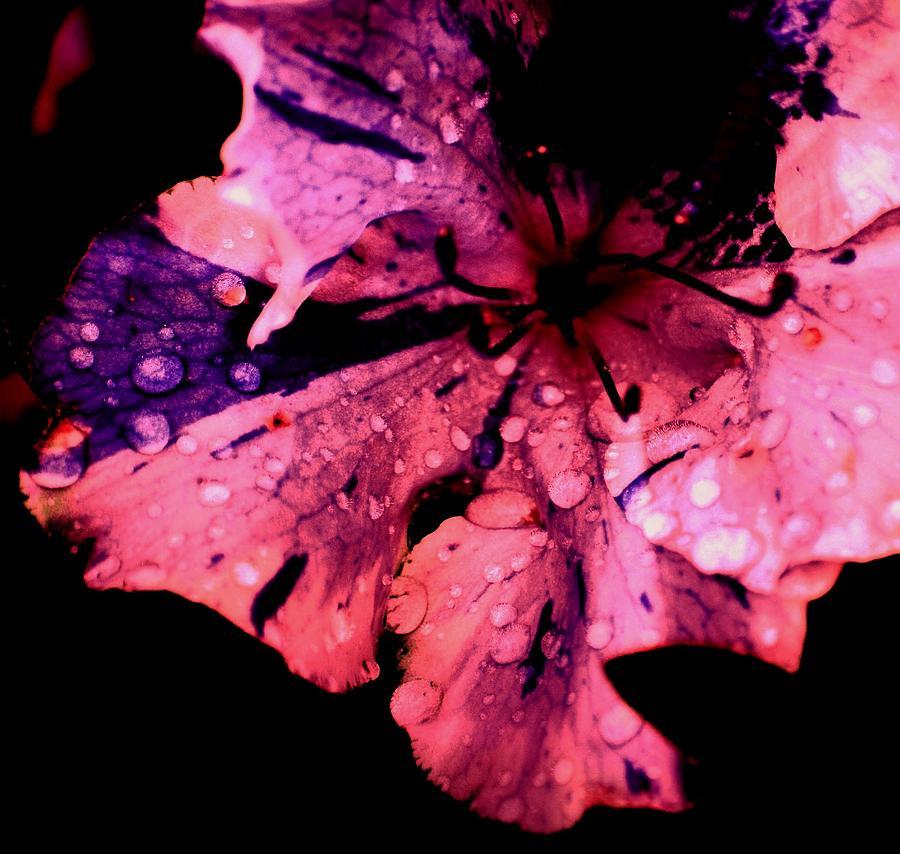 Flower Photograph - Purple Rain by Trudi Southerland