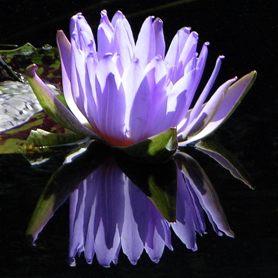 Purple Reflections Photograph by John Lautermilch