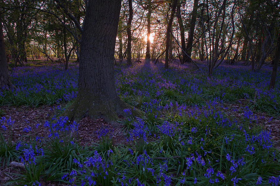 Purple shadows by Nick Atkin