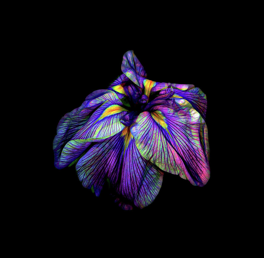 Purple siberian iris flower neon abstract photograph by david gn siberian photograph purple siberian iris flower neon abstract by david gn izmirmasajfo Choice Image