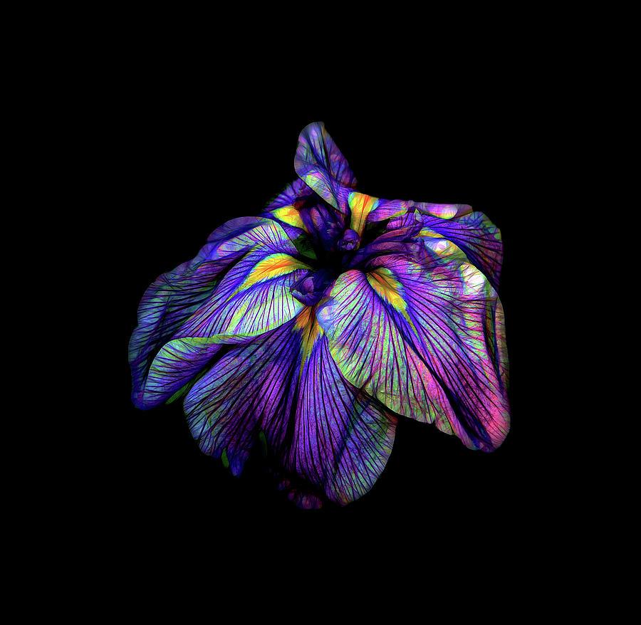 Siberian Photograph - Purple Siberian Iris Flower Neon Abstract by David Gn