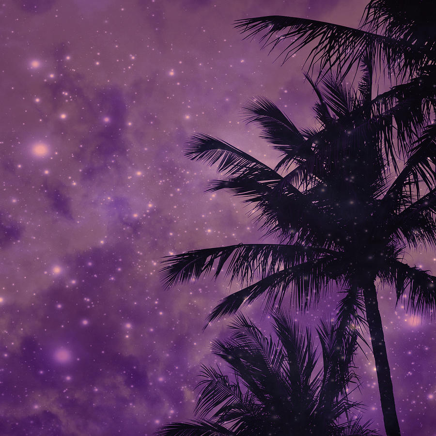 Purple Sky Palm Photograph