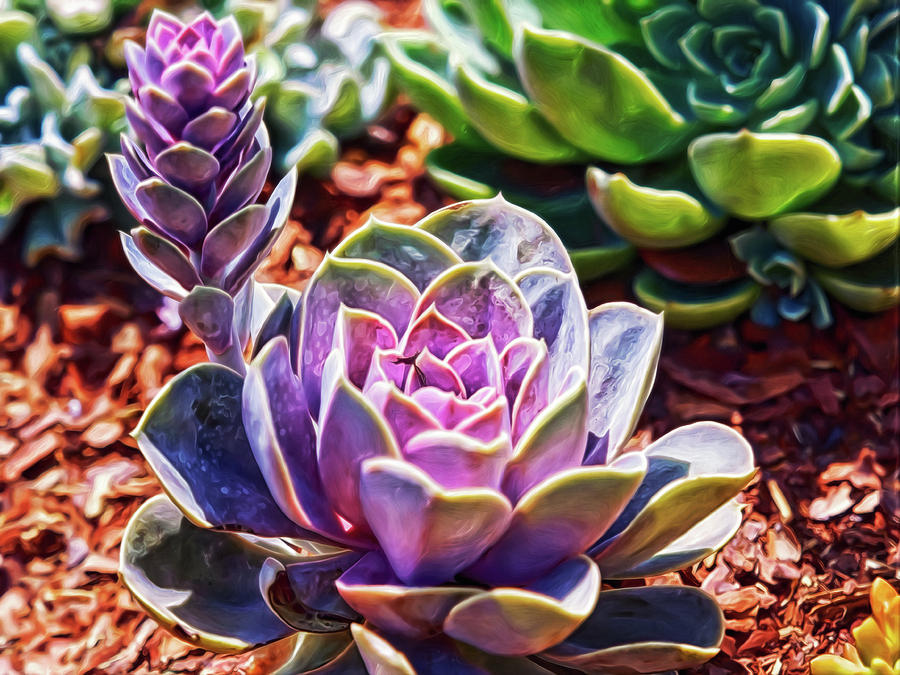 Purple Succulents Digital Art by Doctor MEHTA