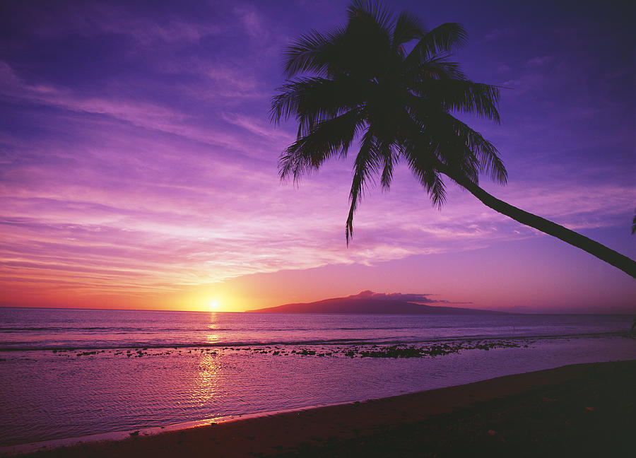 Purple Sunset And Palm Photograph By Ron Dahlquist