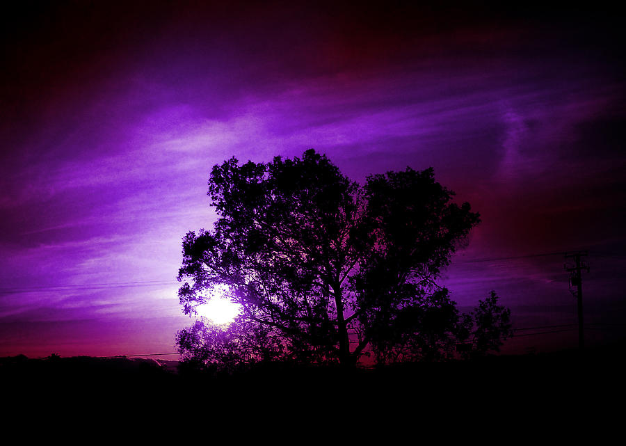 Sun Photograph - Purple Sunset by Robert Ball