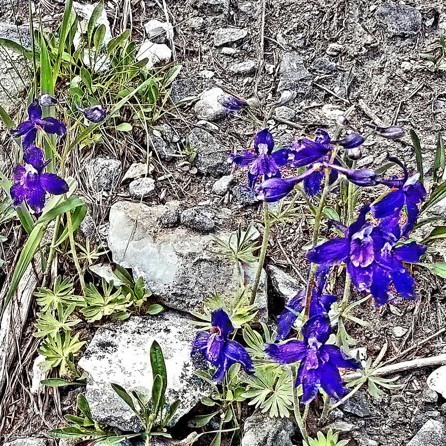 Purple Survivors by Susan Kinney