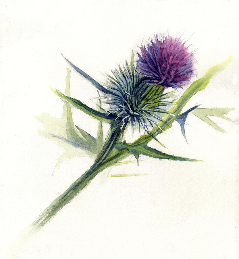 Purple Thistle Painting By Leslie Redhead