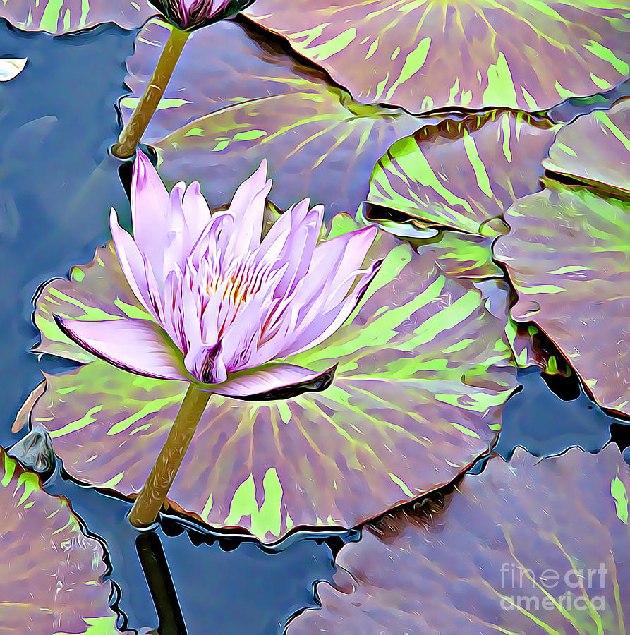Purple Water Lily by Tracy Ruckman