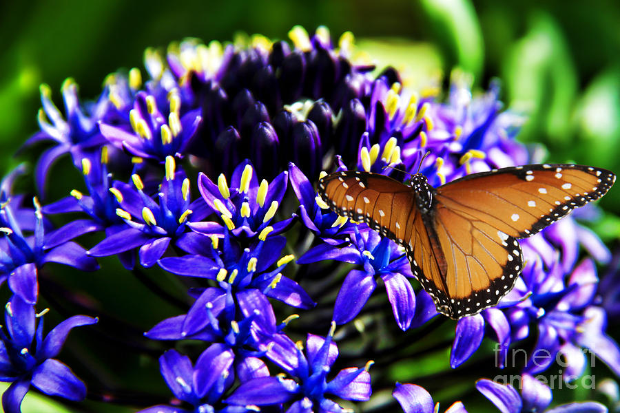 Purple World Photograph - Purple World by Mariola Bitner