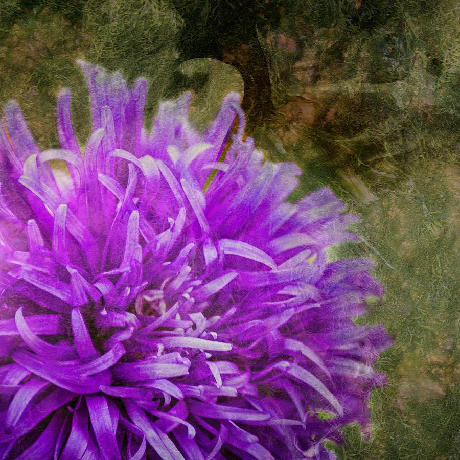 Zinnia Photograph - Purple Zinnia by Rod Sterling