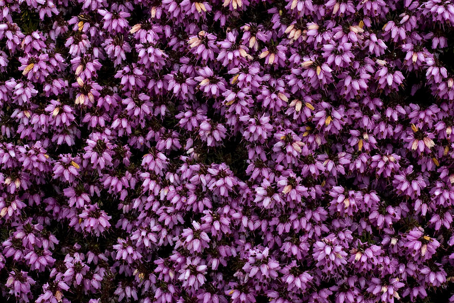Color Photograph - Purpleness by John Gusky