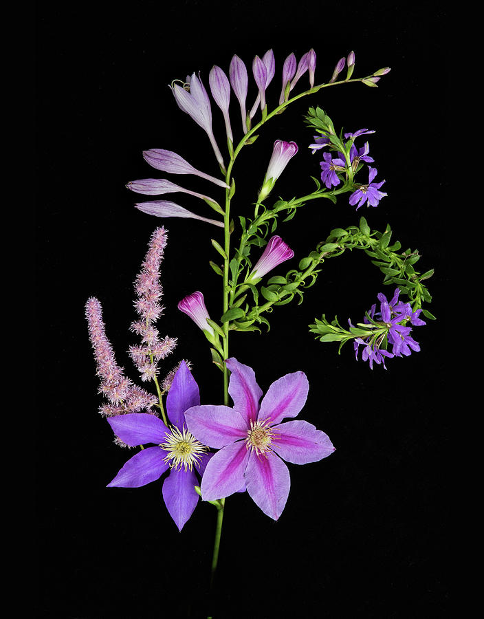 Flora Photograph - Purples by Joy Schmitz