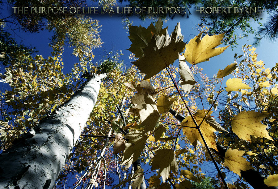 Purpose Photograph - Purpose Of Life Is A Life Of Purpose by Kyle Schmierer