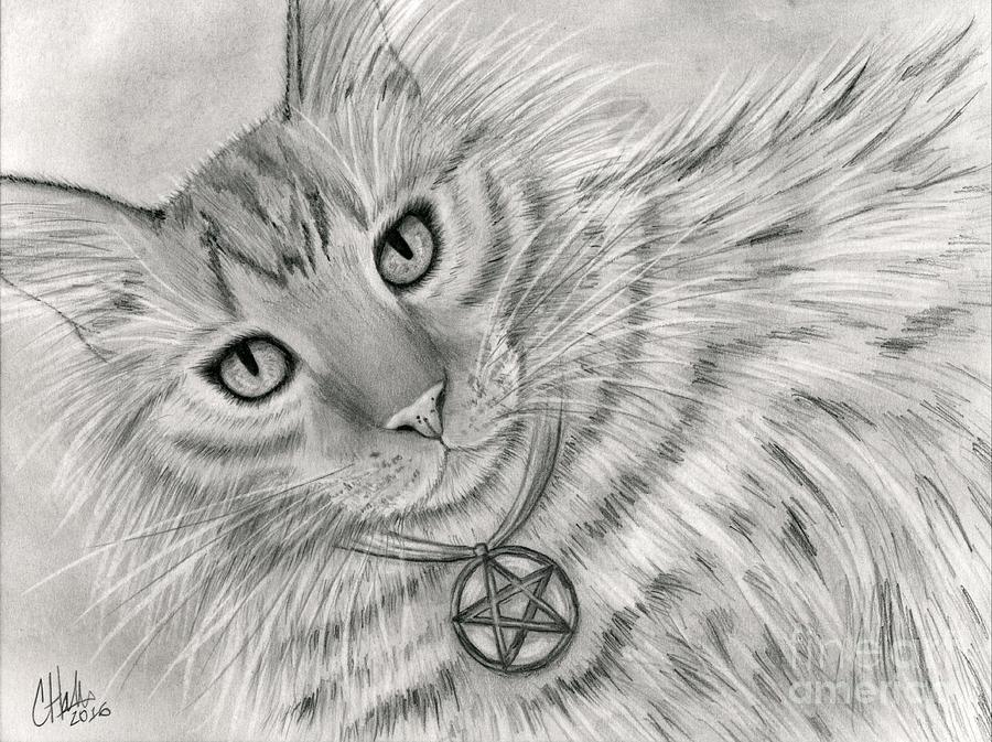 Purrfect Page of Pentacles - Tarot Card Art by Carrie Hawks