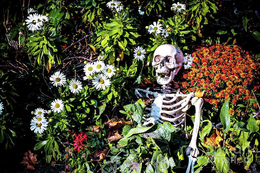 [Image: pushing-up-daisies-colleen-kammerer.jpg]