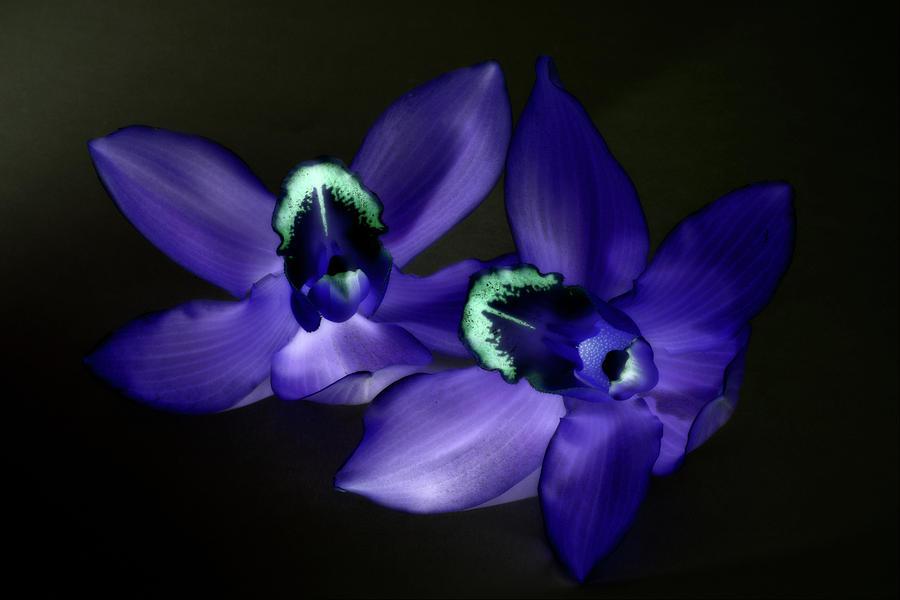 Flower Photograph - Twins  by Paulina Roybal