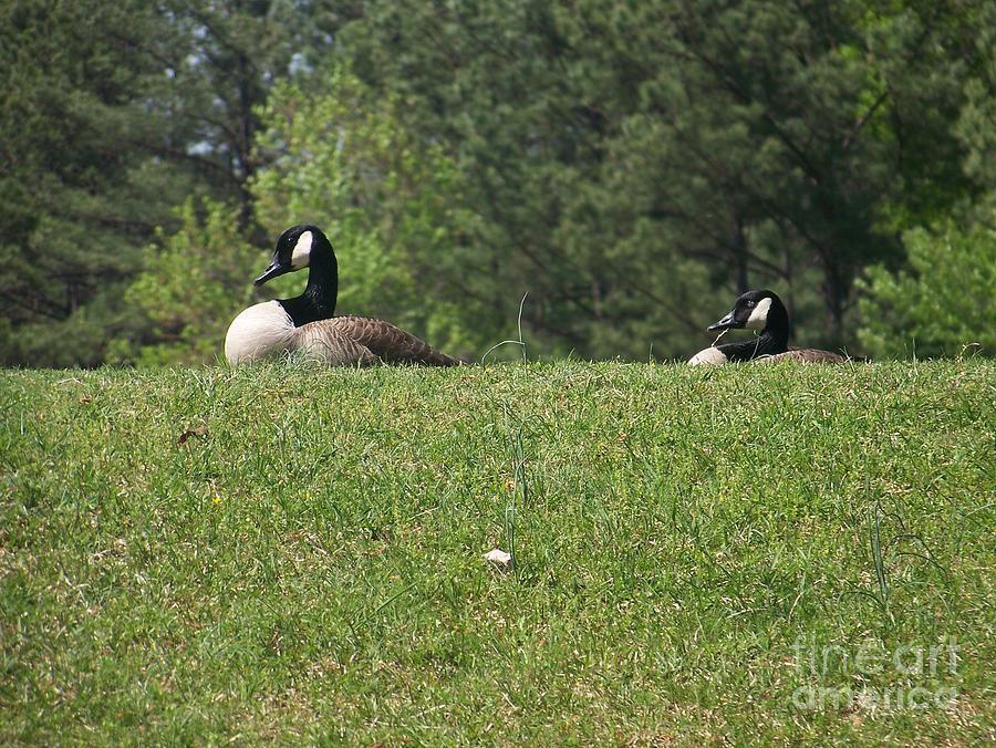 Quack Quack Photograph - Quack Quack by Kevin Croitz