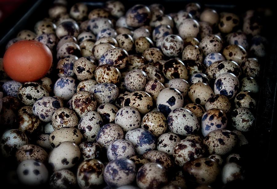 Quail Eggs Photograph - Quail Eggs Asia  by Jamie Cain