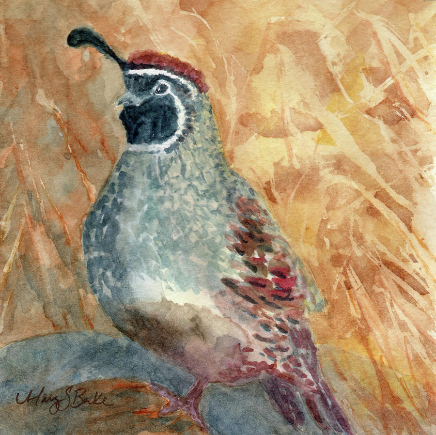 Quail in the Brush by Mary Benke