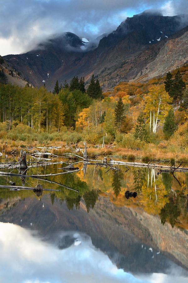 Quaking Aspen Forest Lundy Canyon Photograph by Sebastian Kennerknecht