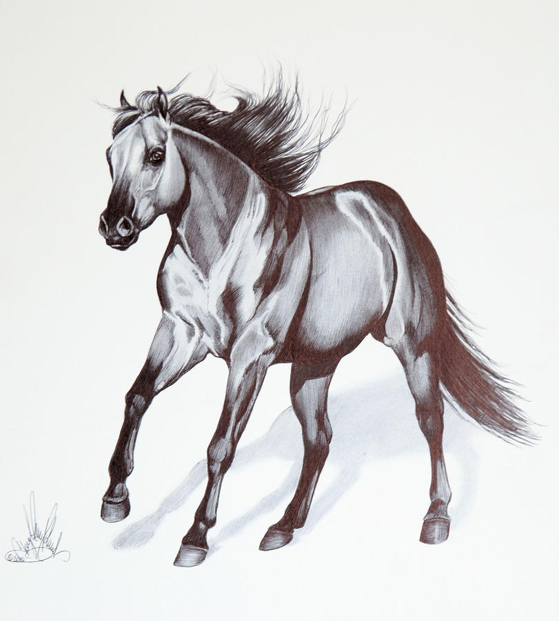 Quarter Horse At Lope Drawing by Cheryl Poland