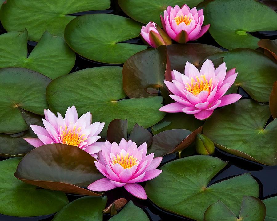 Flower Photograph - Quartet Plus One by Margaret Barry