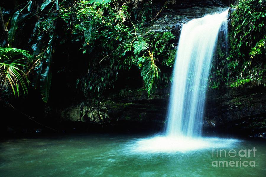 Puerto Rico Photograph - Quebrada Juan Diego Waterfall Mirror Image by Thomas R Fletcher