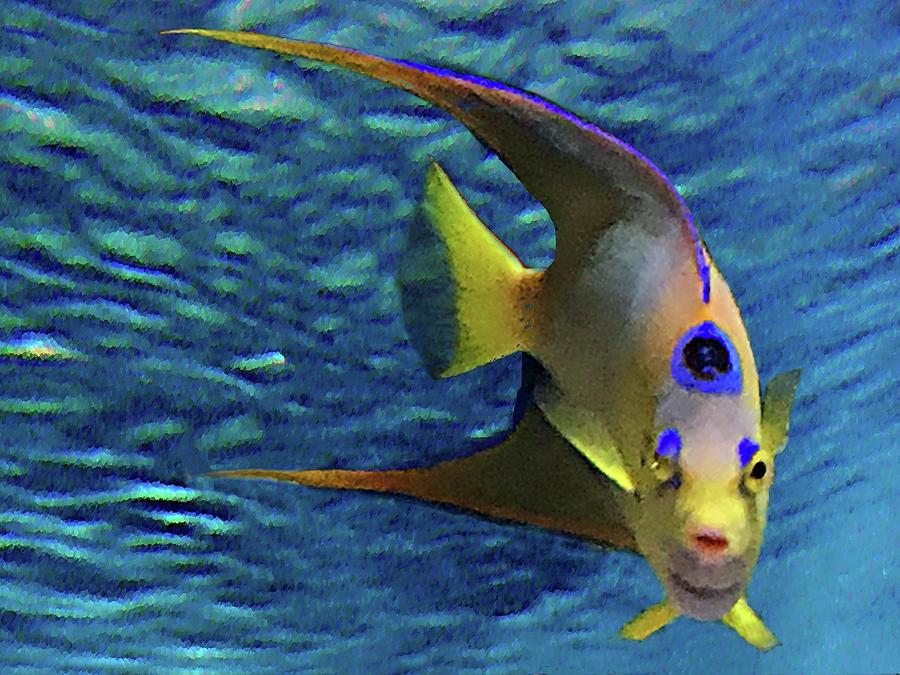 Queen Angel Fish Mixed Media