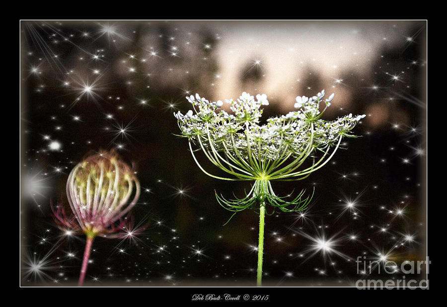 Queen Photograph - Queen Annes Lace And Sparkles At Dusk by Deb Badt-Covell
