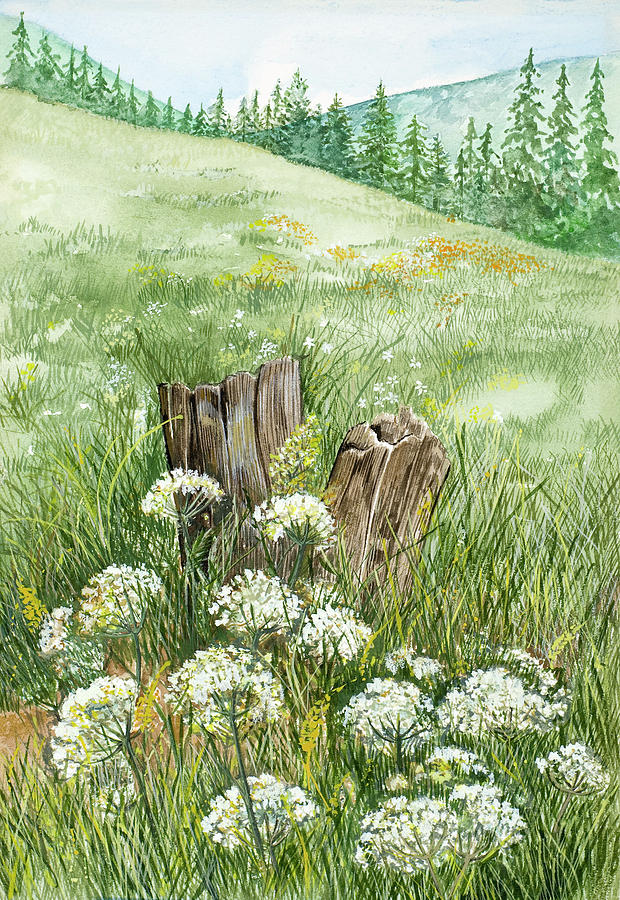 Queen Annes Lace In A Mountain Meadow Painting