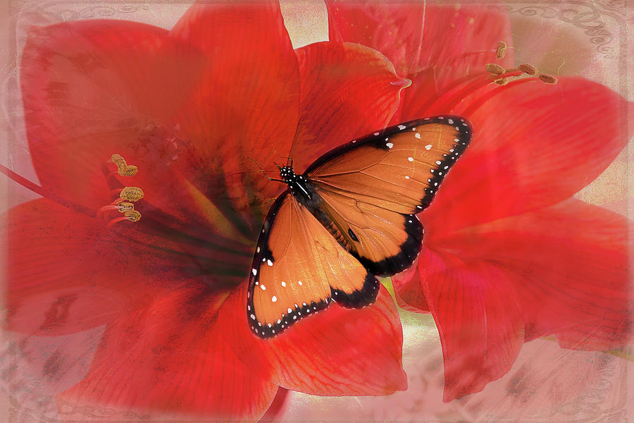 Queen Butterfly Amaryllis by Vicki Stansbury