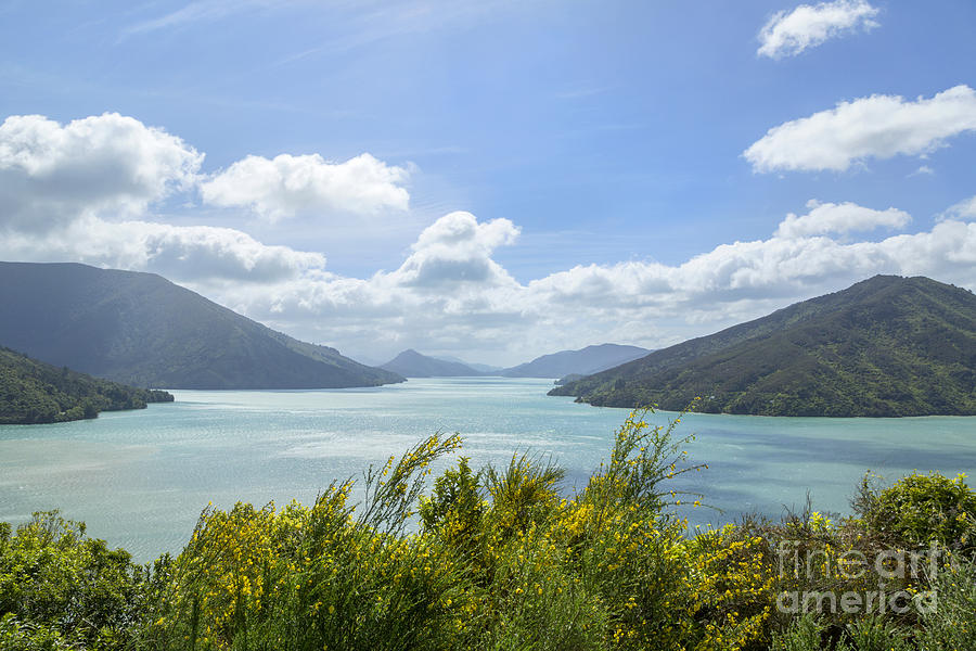 New Zealand Photograph - Queen Charlotte Sound, New Zealand by Julia Hiebaum