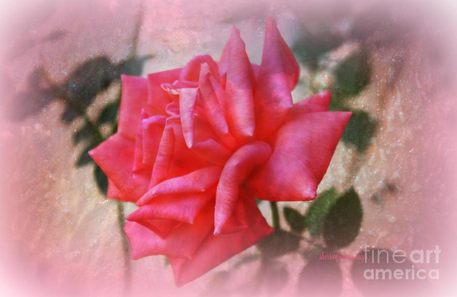 Rose Photograph - The  Rose That Last Forever by Sherris - Of Palm Springs