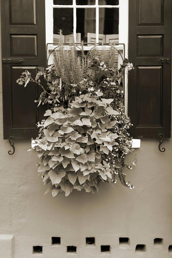 Flowers Photograph - Queen Street Flowers Charleston Sc by Dustin K Ryan