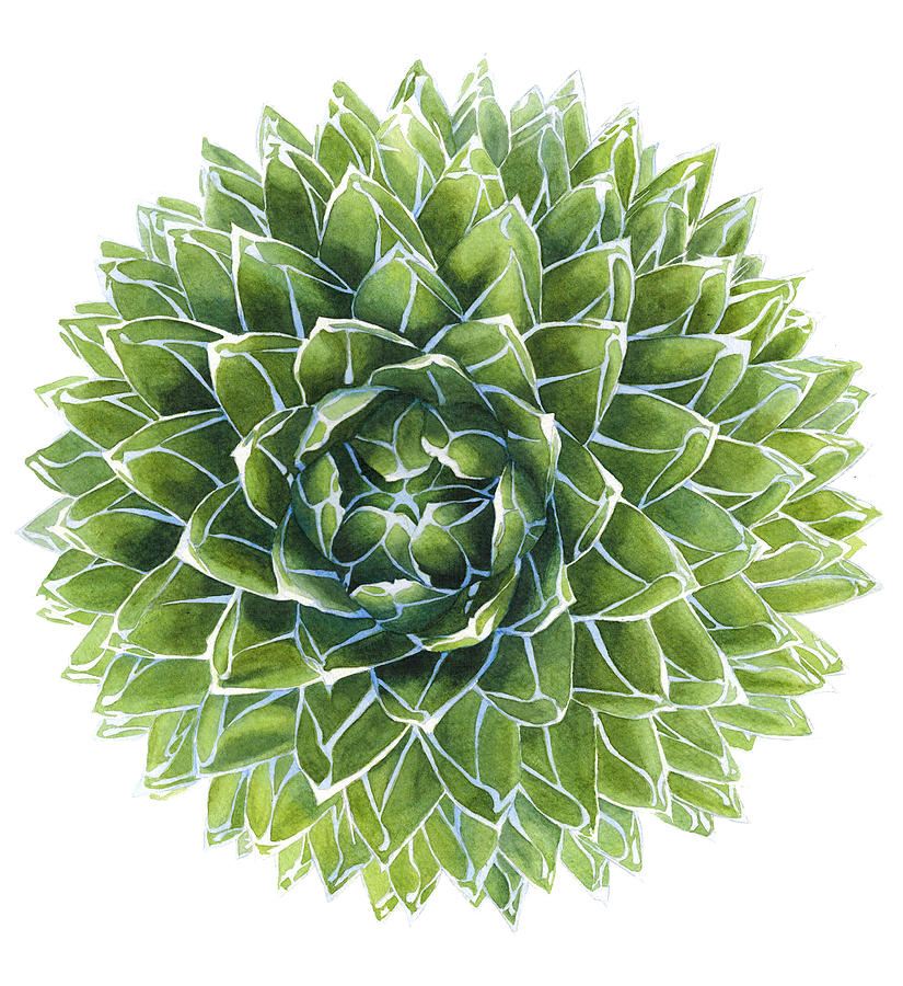 Succulent Painting - Queen Victoria Agave Succulent by Kat Skinner