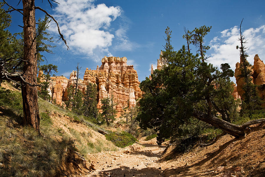 Bryce Canyon Photograph - Queens Garden Trial by James Marvin Phelps