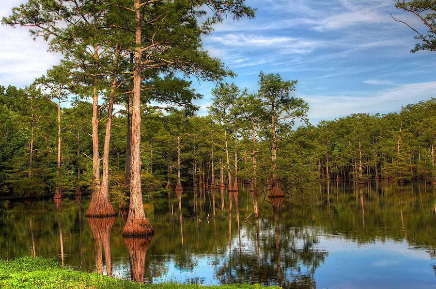 Quiet Photograph - Quiet Afternoon At The Bayou by Ester McGuire