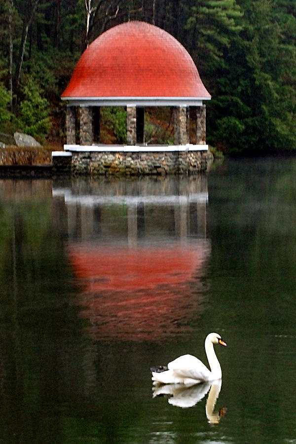 Swan Photograph - Quiet Afternoon by William Bray