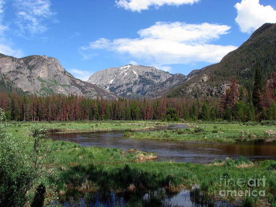 Nature Photograph - Quiet by Amanda Barcon