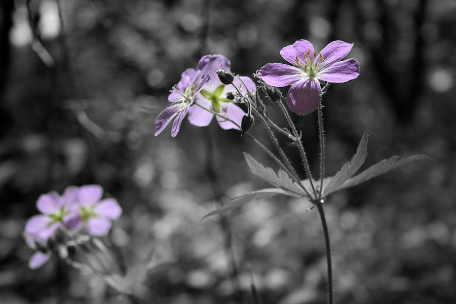 Wildflowers Photograph - Quiet Gatherings by Dylan Punke
