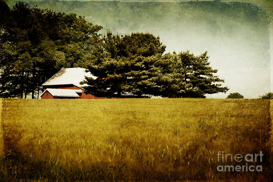 Barn Photograph - Quiet by Lois Bryan