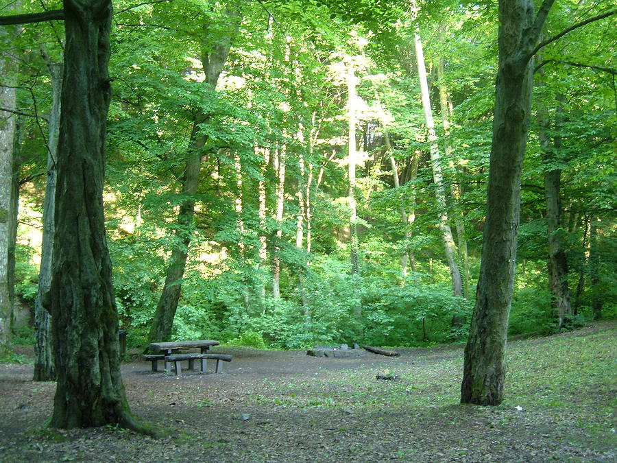 Picnic Table Photograph - Quiet Picnic Area In The Woods by Helena Helm