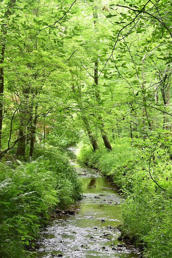 The Quiet Stream