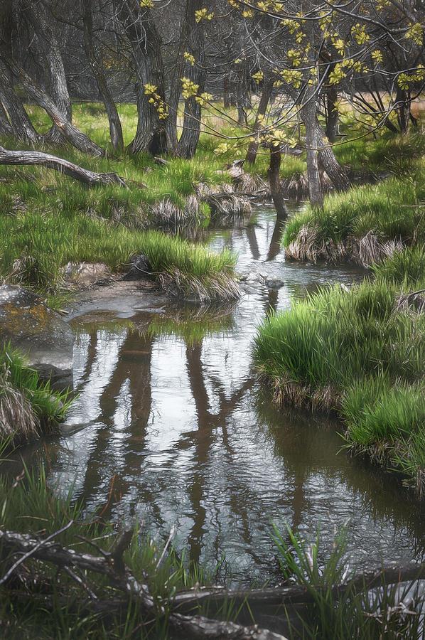 Stream Photograph - Quiet Stream by Scott Norris